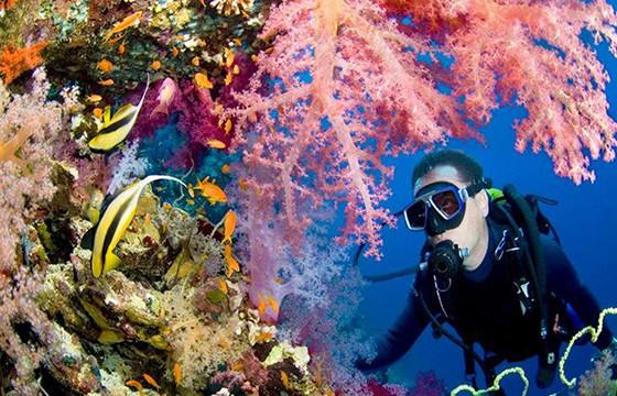 Impresionantes ecosistemas marinos. Islas Cook.