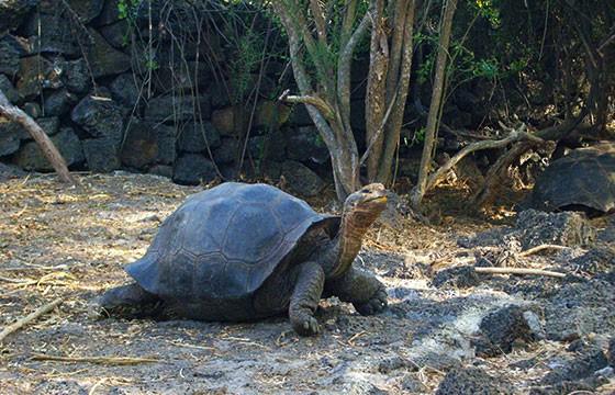 Vista de la Isla Santa Cruz en los Galápagos