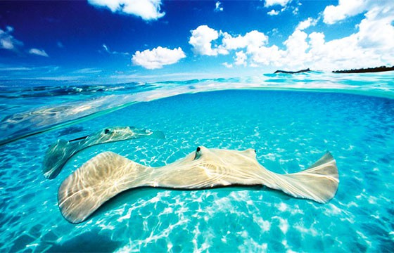 Vista de las Islas Caimán