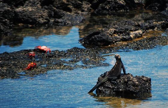 Vista de Puerto Ayora en Islas Galápagos