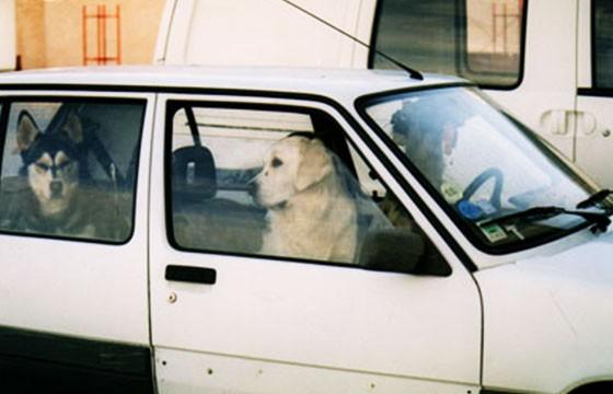 Tip: No dejes a tu perro en el auto