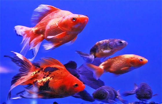 peces en el mar.