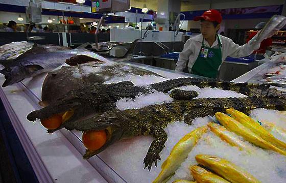 Comida exótica en China
