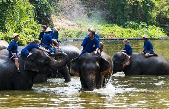 Campamento de Elefantes en Tailandia