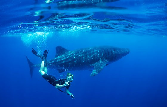 Acompañante bajo el agua