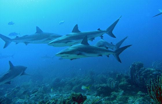 Ataques de tiburones en playa Boa Viagem Brasil