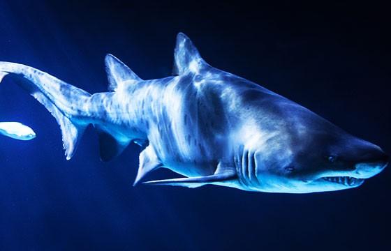Ataques de tiburones en playa Grand Bahamas