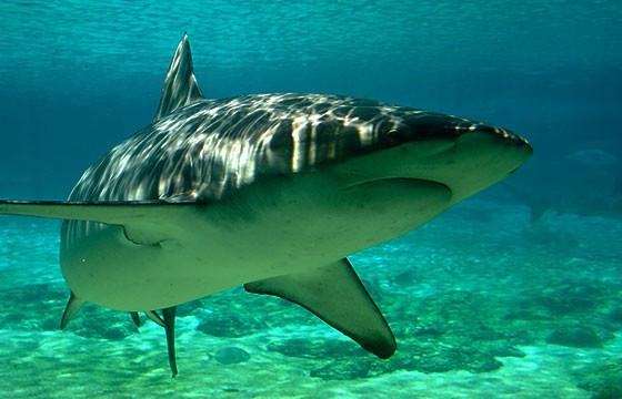 Ataques de tiburones en playa Bondi Beach Australia