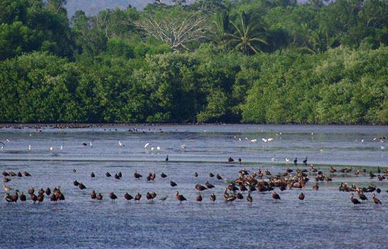 Laguna-de-Aves-Quelele