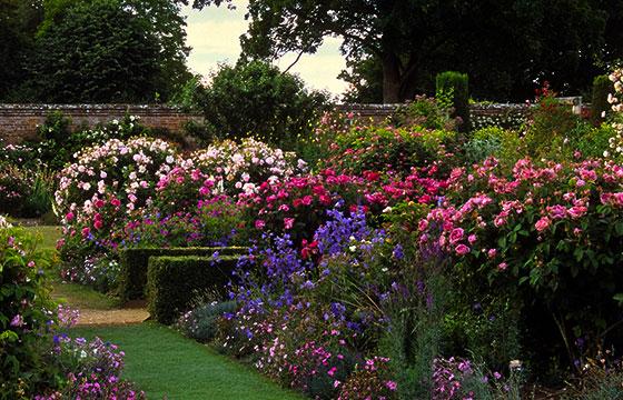 Jardines de rosas de Mottisfont
