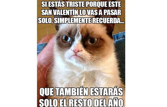 meme con gato