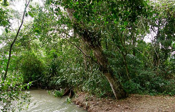 Selva Lacandona-Darij & Ana-Flickr