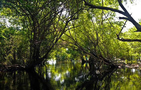 Reserva Tabasco