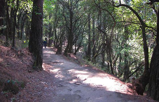desiertodelosleones-lauranazimiec-Flickr