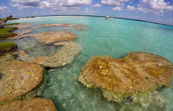 Stromatolite the beginning of life in earth, Bacalar, Quintana Roo-Mex.-Luna sin estrellas-Flickr