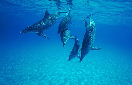 5 dolphins_Save_these_beautiful_creatures