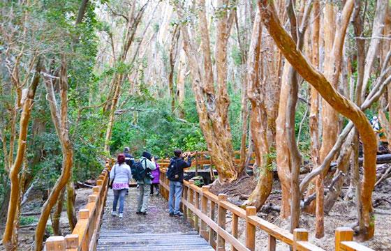 Actividades en el Parque Nacional Los Arrayanes