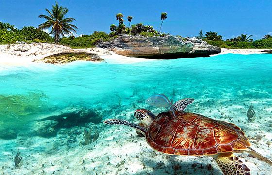 Belleza en playas México