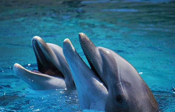 Dolphins_