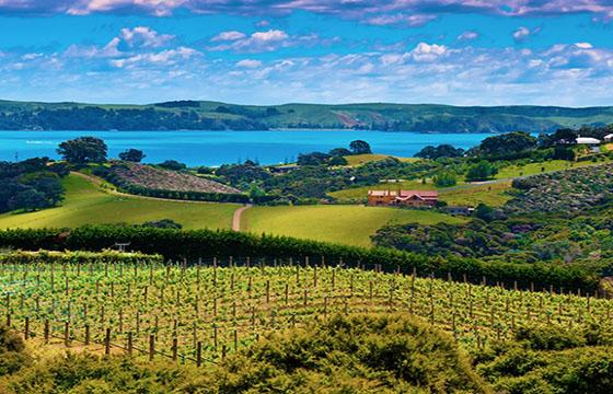 Ruta del vino en Zelanda