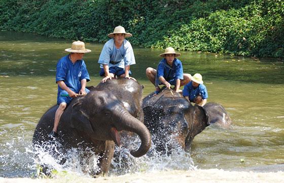 Thai Elephant Conservation Center-Editada-Stefan Maurer-http://bit.ly/1VgaJmP-Flickr