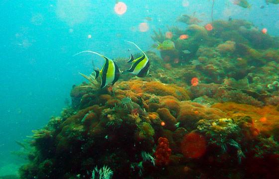 arrecife en México