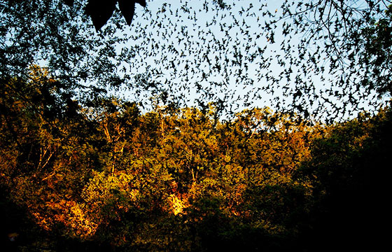 Cueva de los Murcielagos-Editada-Cristopher Gonzalez-http://bit.ly/1pPz0E9-Flickr