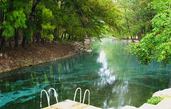 Flora y fauna en Laguna Media Luna