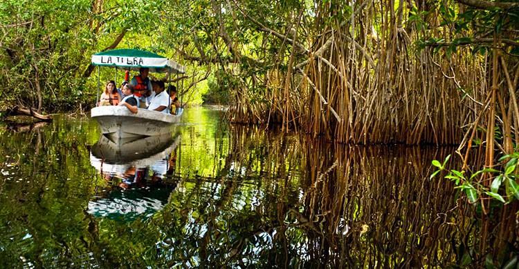 Pantanos de Centla Tabasco