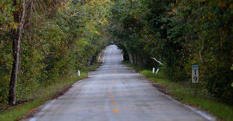 Camino a Calakmul