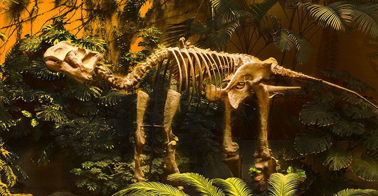 Dino Dino.... UNIVERSUM