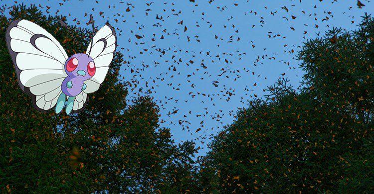 Santuario de la mariposa Monarca-Editada-Carlos Adampol Galindo-http://bit.ly/2auW6t0-Flickr