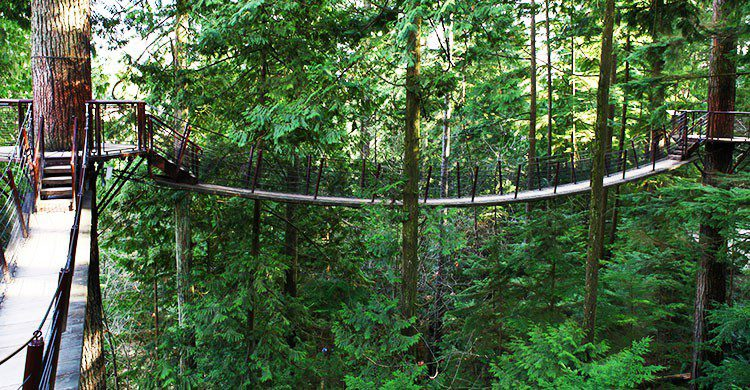 Capilano Suspension Bridge 2012 Winter-GoToVan-Flickr