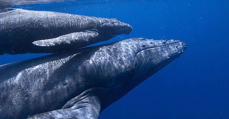 Fuente imagen: ballenasenuruguay.com