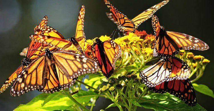 Fuente imagen: news.urban360.com.mx