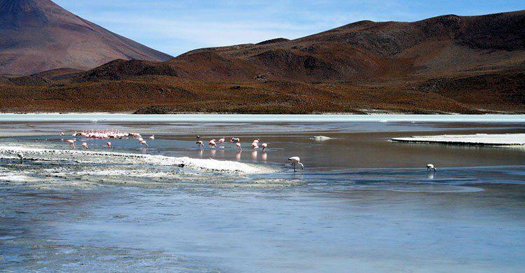 Fuente imagen: revistavivelatinoamerica.com