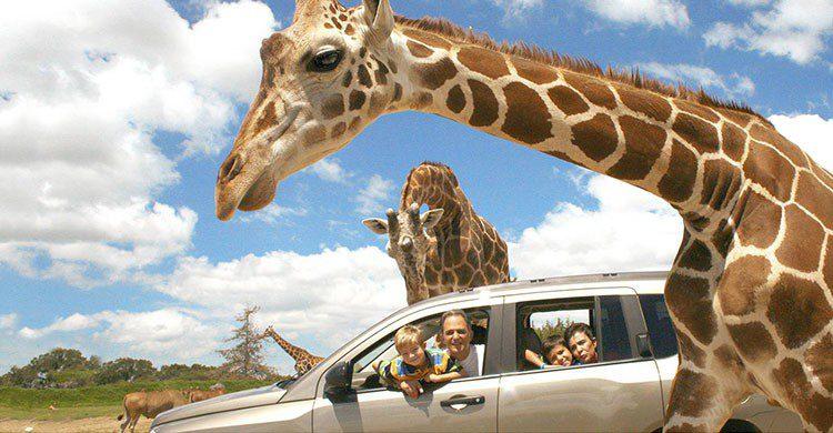 Safari en Puebla