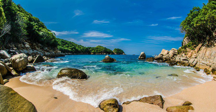 palmitas acapulco