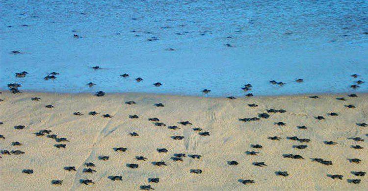 Tortugas nacida