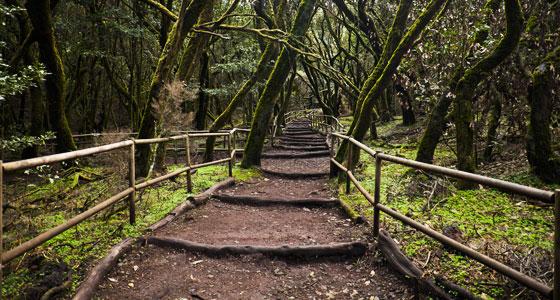 garajonay-bosque-encantado-Diego-Delso