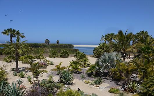 Beach near Todos Santos