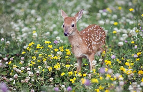 9 Bambi