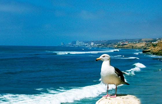 Vista de Rosarito playa imperdible de la Ruta Baja California