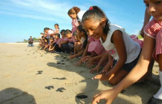 Ecoteco Campamentos Tortuga, Tecolutla, Veracruz. Los 8 mejores campamentos para enviar a tus hijos.