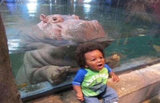 Tierno Hipopótamo. Selfies donde se han colado animales.