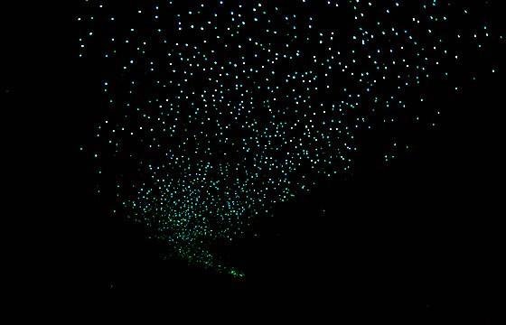 """Cueva iluminada por el mosquito """"Glowworm"""""""