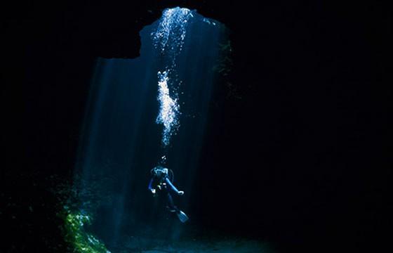 Impresionantes especies acuáticas en el agujero azul en Belice