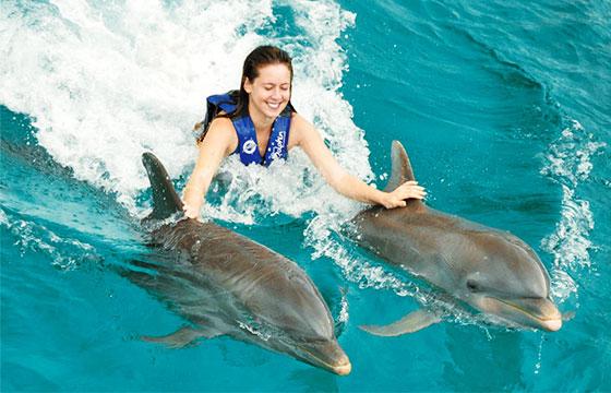Nadar con delfínes