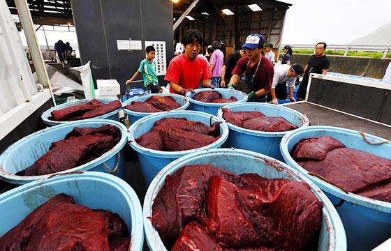 carne de delfin, ballena y tiburón