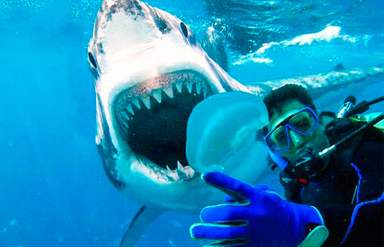 selfie-con-tiburon